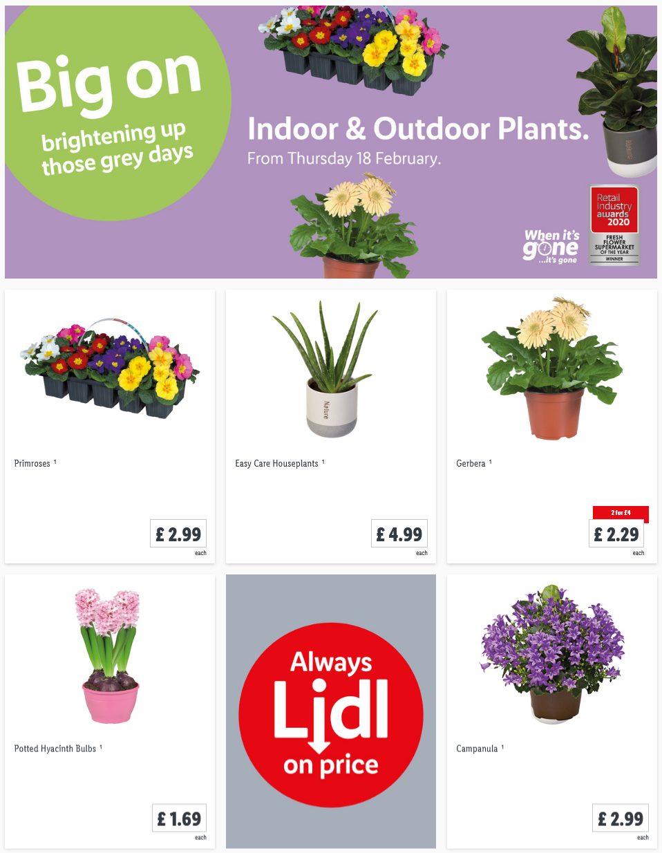 LIDL Offers this Thursday Indoor Outdoor Plants From 18th February 2021