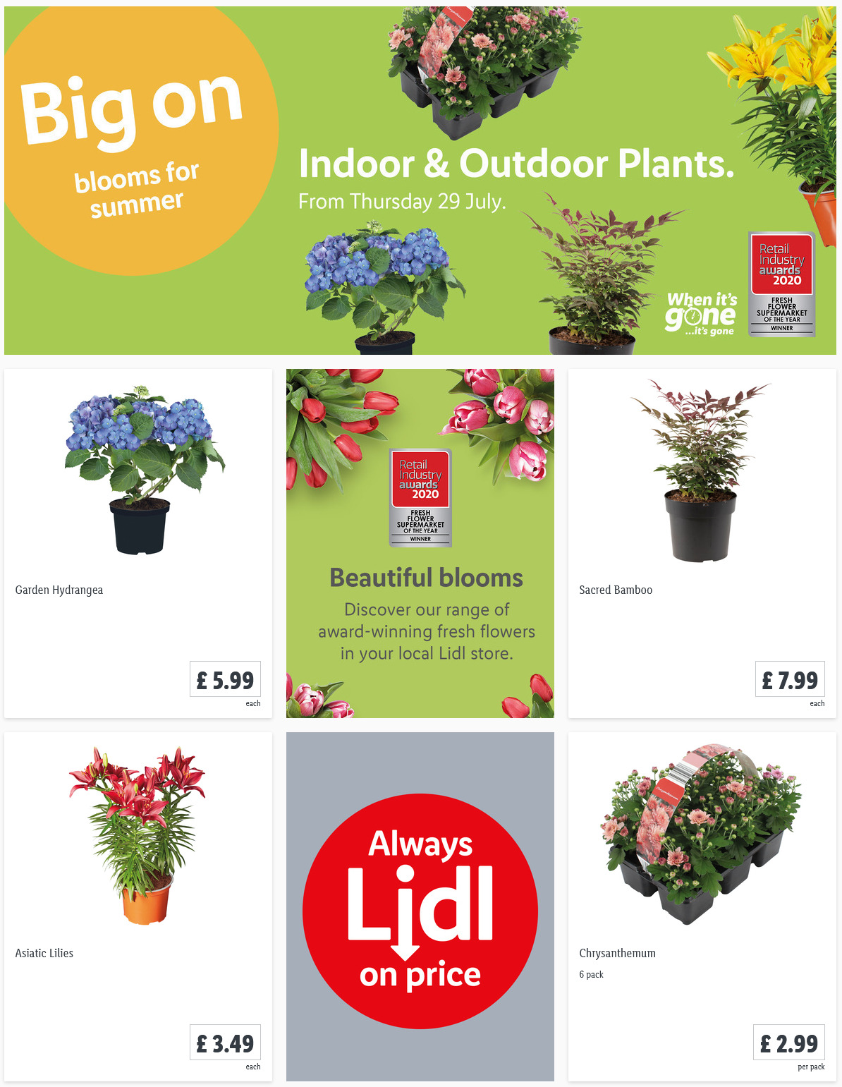 LIDL Offers this Thursday Indoor Outdoor Plants From 29th July 2021
