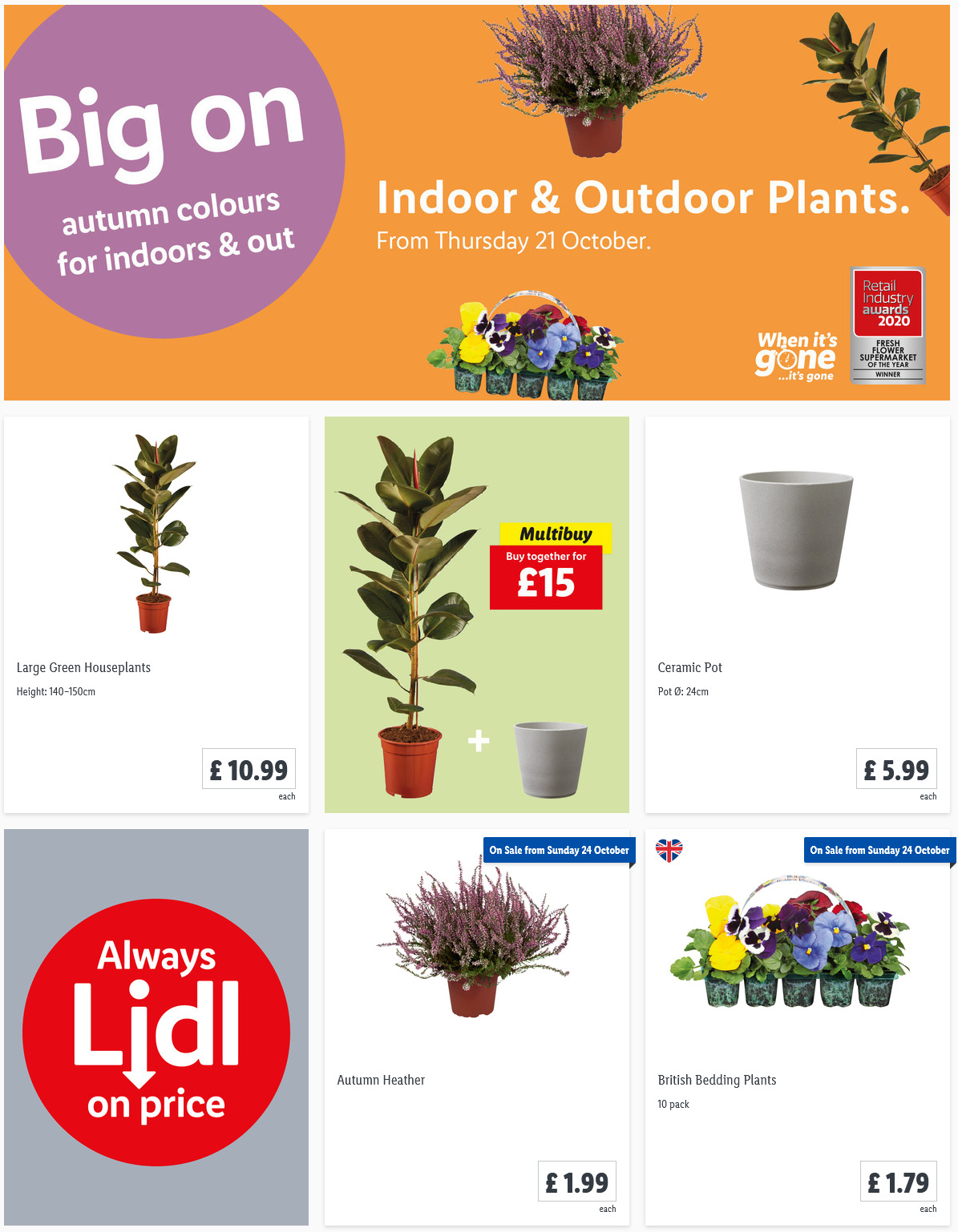LIDL Offers this Thursday Indoor Outdoor Plants From 21st October 2021
